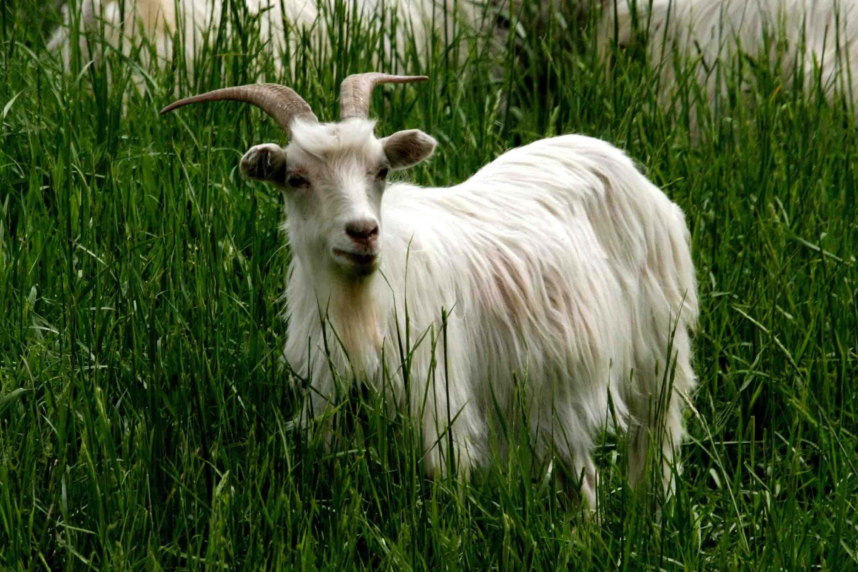 新疆有什么稀有动物