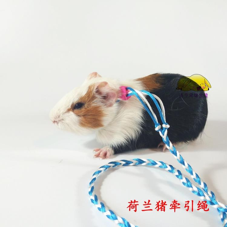 Small pet traction rope squirrel hamster rabbit hamster guinea pig color classification hamster leash 2 metersrabbit leash 14mdutch pig leash 14m longrabbit leash 2mhamster leash 14madult rabbit traction ropedutch publicscrutiny Image collections