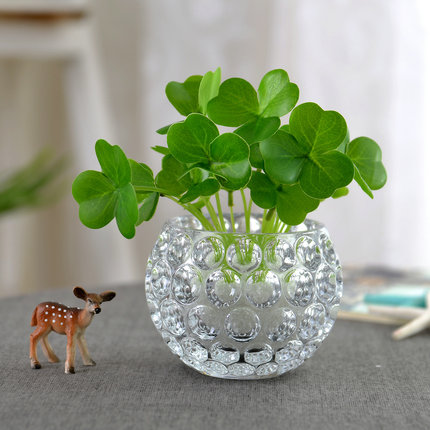 Small Flower Pot Glass hydroponic bottle container copper money plant green vine vase transparent living room flower crystal ball
