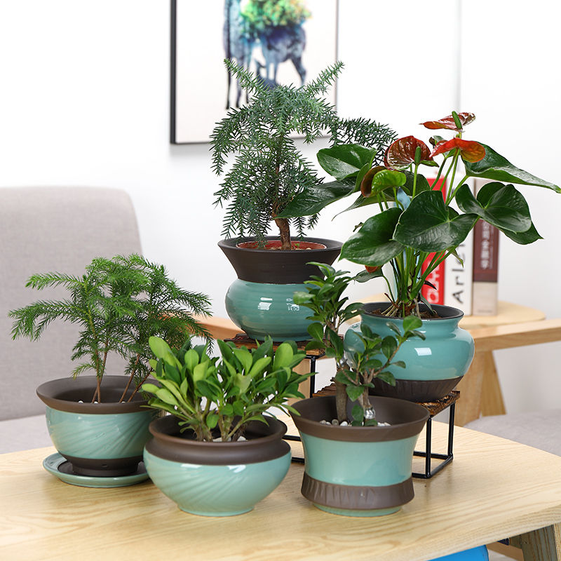 Ceramic flower pot optional along an abundant distribution 】 【 celadon green plant containers with more meat tray was contracted money plant daffodils