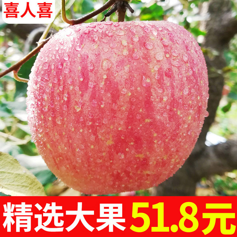 Fresh apple fruit should be seasonal red Fuji apple Wholesale a whole box of 5 pounds of pingguo eat pingguo
