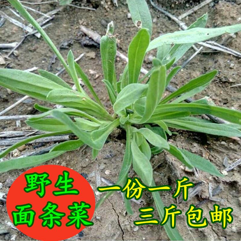 2017新鲜面条菜农家种植蔬菜面条棵柳叶菜 野菜 500g/份 三斤包邮_7折图片
