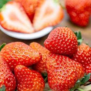 圣野果源 丹东99红颜草莓3斤现摘新鲜奶油牛奶东港九九大草莓批发