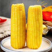 东北香甜粘玉米10支真空装