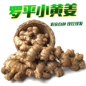 云南特产罗平小黄姜3斤