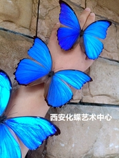 Xian Butterfly Art Center