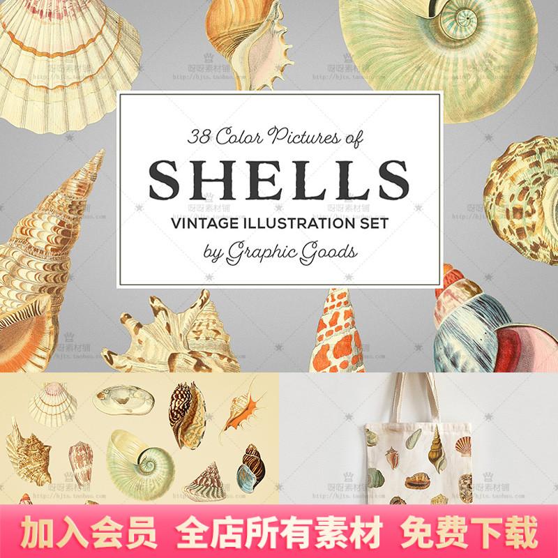 手绘复古彩色贝壳海螺插图PNG免抠图片装饰包装服装海报设计素材