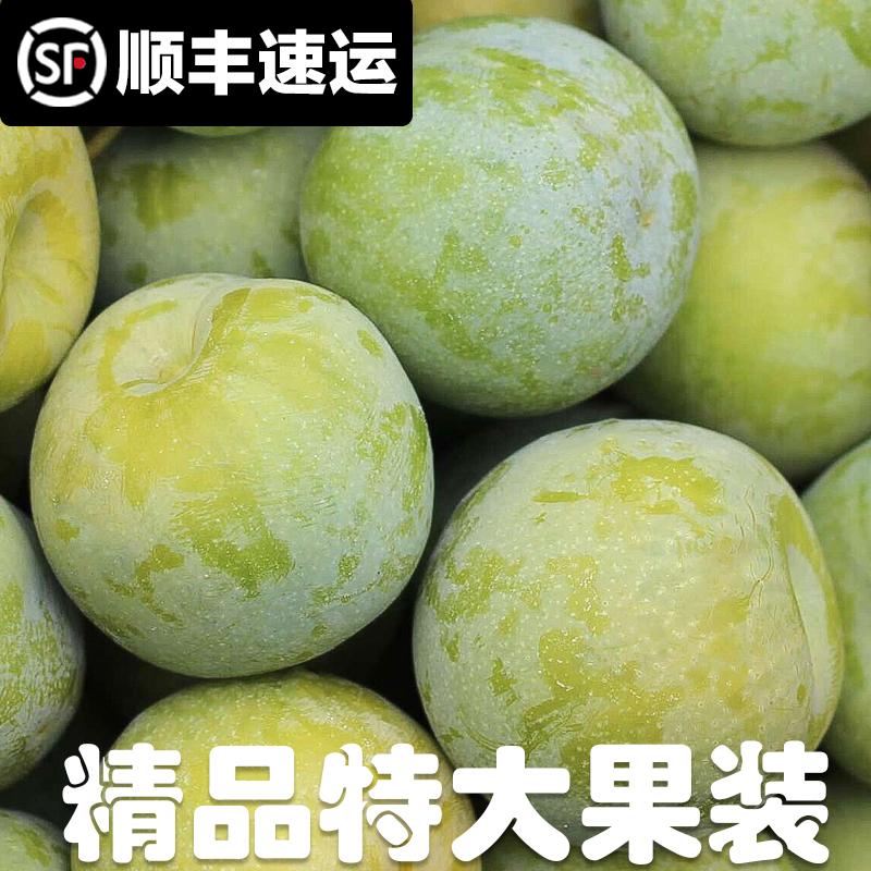 特大果5斤 四川汶川李子新鲜水果脆红李青脆李脱骨李当季孕妇