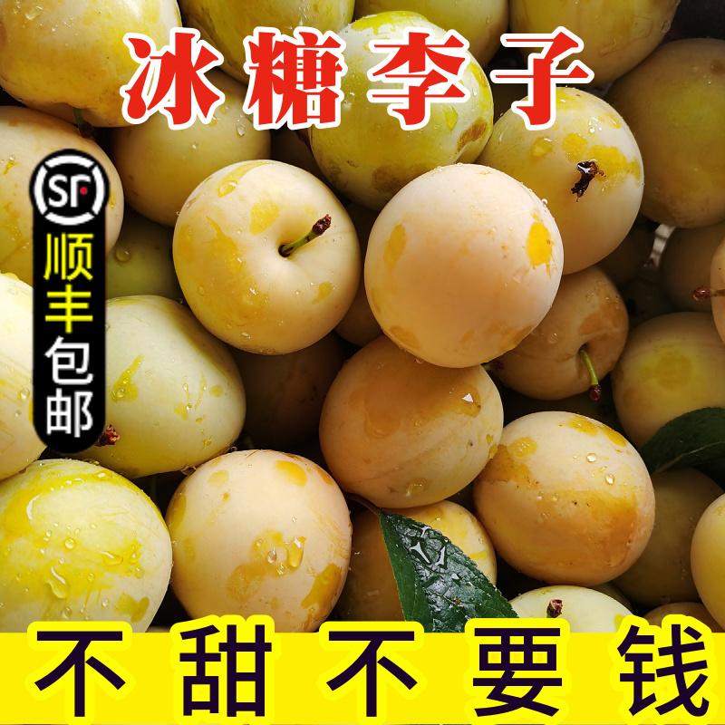 纯甜冰糖李子四川蜂糖李子果新鲜桃花李蜂蜜黄金奈李5斤水果包邮