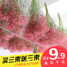Gypsophila dried flower bouquet living room home decoration real flower eternal flower Yunnan natural forget-me-not dried flower wholesale