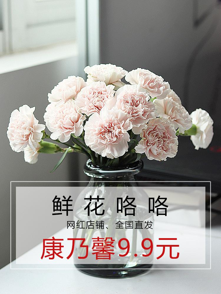 贩量新品9.9元 云南团上鲜花新鲜新年家用康乃馨鲜花直批基地空运