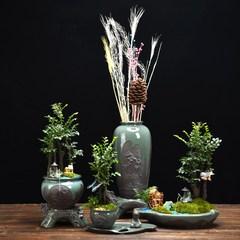 小叶紫檀盆景植物室内花卧室镇宅四季常青好养小树桩老桩树苗盆栽