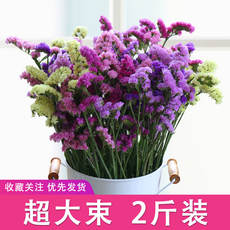 Super large bunch 2 kg dry flower bouquet real flower natural dried starry sky forget me to talk about the sale of living room furnishings bedroom