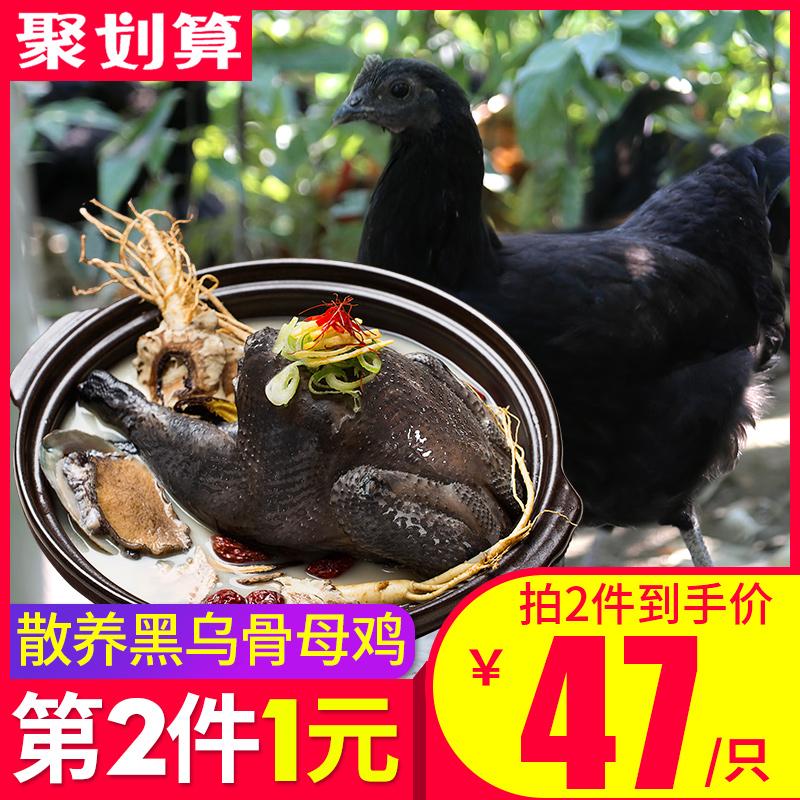 乌鸡新鲜土鸡农家散养老母鸡乌骨鸡野鸡五黑鸡正宗走地鸡农村笨鸡