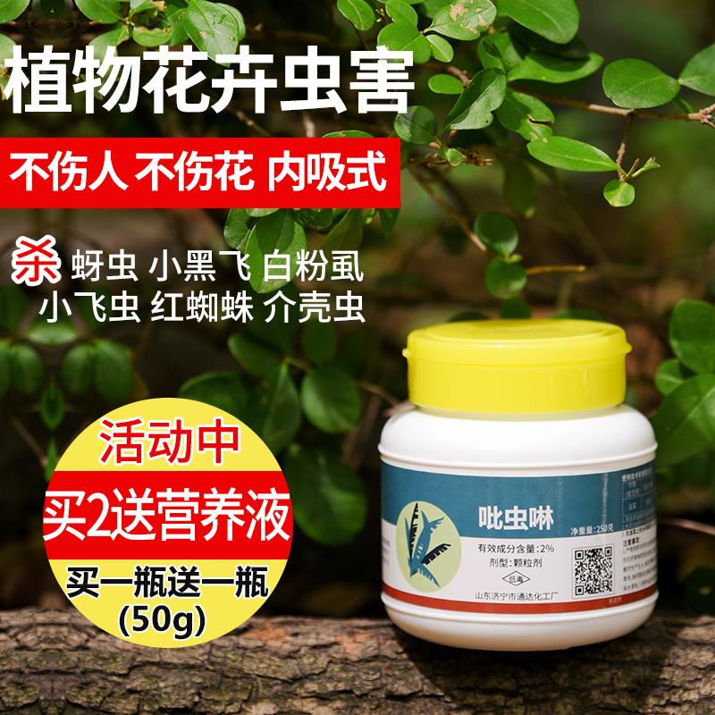 小白药通用花卉土壤杀虫剂蚧壳虫专用多肉植物驱虫药红蜘蛛吡虫啉