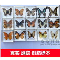 Kindergarten primary school teaching children's toys animal insects butterfly resin decorative ornaments