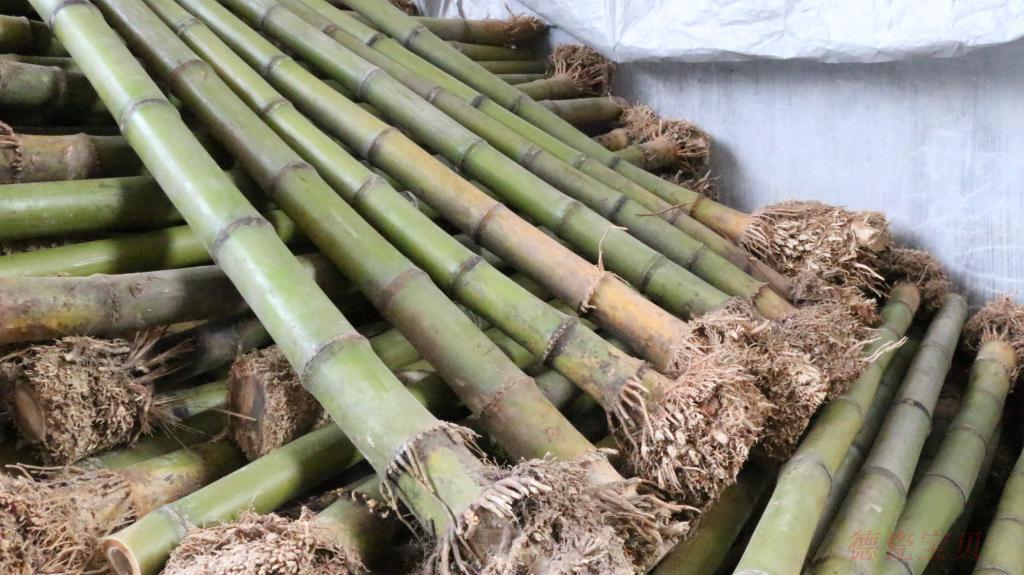 台湾桂竹南箫料尺八料洞箫排箫桂竹毛竹石竹金竹带根壁厚可达10mm