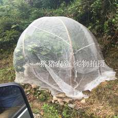 60 mesh insect net Yangmei anti fruit fly net vegetable greenhouse insect nets flower tobacco planting net anti-wood