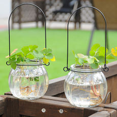 Creative hanging transparent glass vase pumpkin small bottle simple hydroponic flower pot Indoor gardening home decoration