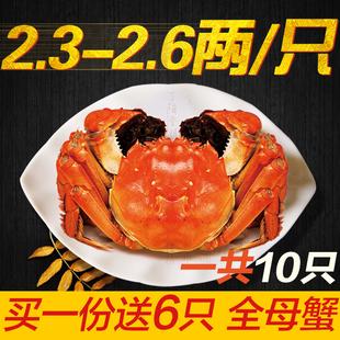 现货送6只母蟹 阳澄湖大闸蟹 鲜活大螃蟹 2.6-2.3