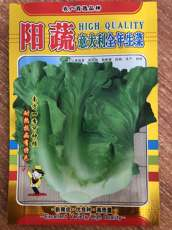 Yang vegetable, italian lettuce, vegetable seed