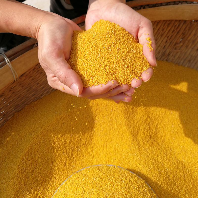 陕北特产米脂黄小米五谷杂粮500g*5真空小黄米月子宝宝米