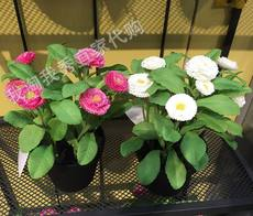 IKEA domestic purchasing free purchase Feifeika artificial pot plant daisy special offer