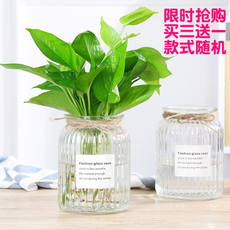 Hydroponic glass vase office potted green radish rich bamboo water planting pot creative transparent high vase