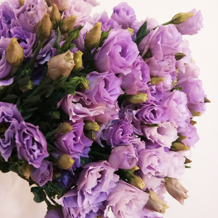 冲冠鲜花活动 新鲜多色洋桔梗/单支购云南鲜花速递送女友玫瑰插花