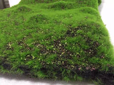 Simulation plant wall green plant wall artificial turf plastic flower fake moss 藓 turf wallpaper wallpaper interior carpet