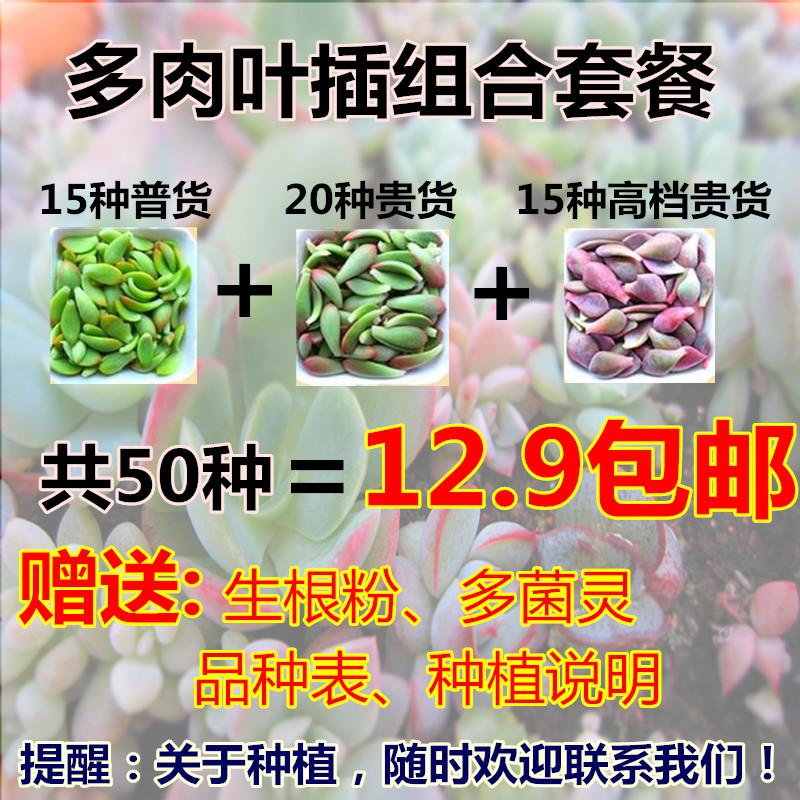 多肉植物叶片多肉叶片进口贵货套餐种子叶插肉肉花卉组合盆栽包邮