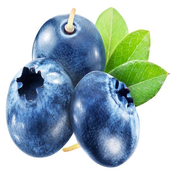 特价促销现摘现发新鲜现货蓝莓4盒500g国产蓝莓水果鲜果顺丰空运