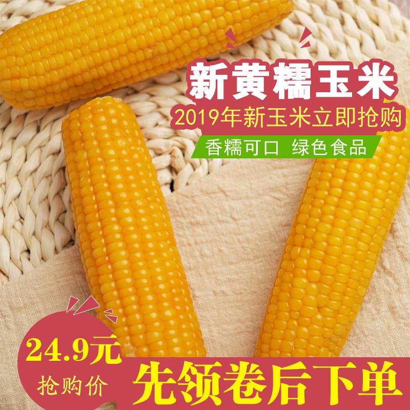 新黄糯玉米10根东北粘苞米棒真空微甜黏鲜嫩香粗粮非转基因非白