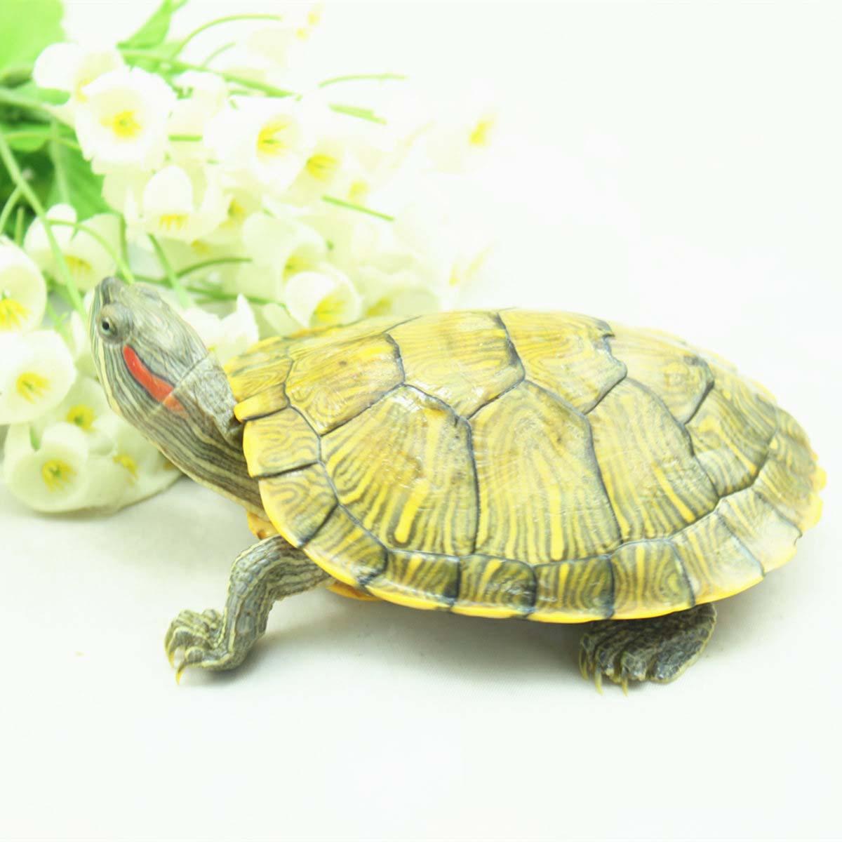 包邮】活巴西龟7cm巴西彩龟红耳龟情侣龟招财龟发财龟草龟小乌龟