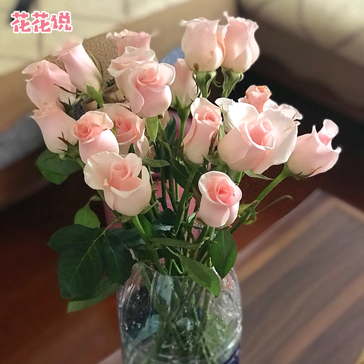 云南昆明鲜花速递基地直发一周一花红玫瑰花办公室鲜花包邮20支