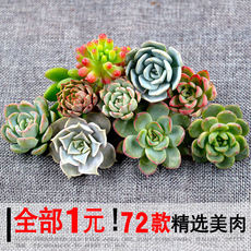 New succulent plant combination potted succulent green plant flowers wholesale indoor super cute with pots to send soil clearance