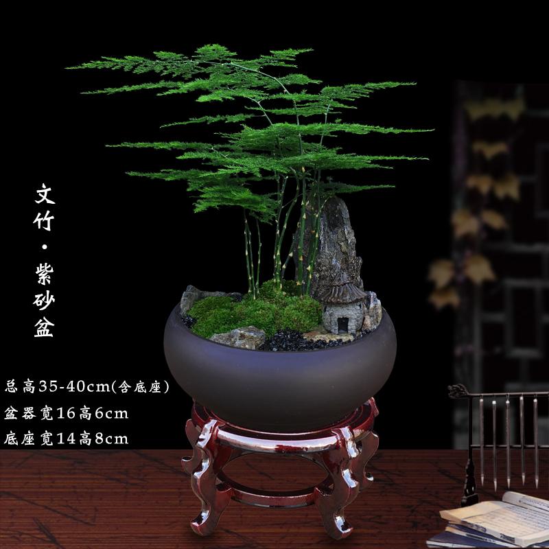文竹盆栽室内绿植办公室花卉四季植物小叶紫檀黄杨松树微景观盆景