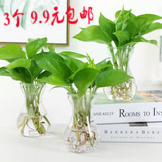 Creative simple hydroponic plant glass vase flowerpot transparent hyacinth water green dill Guanyin bamboo vase
