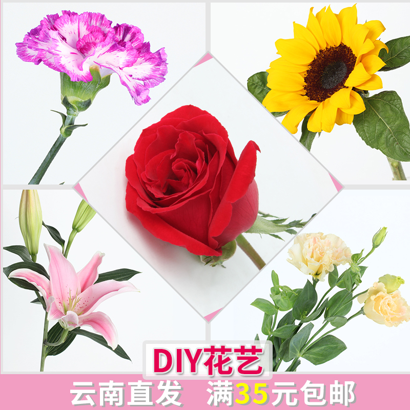 天堂鸟昆明家用鲜花批发百合花单支花束鲜切花办公室新鲜玫瑰花插