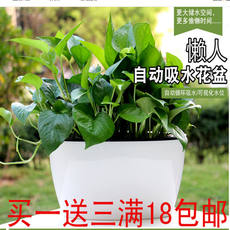 Imitation ceramic automatic water absorption lazy flower pot resin green radish potted indoor water storage creative meat free watering flower pot
