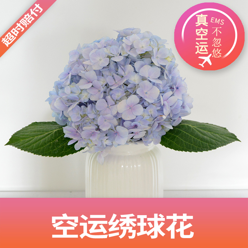 鲜花彩色绣球花束装饰婚庆新娘手捧花求婚送闺蜜朋友病人女友礼物
