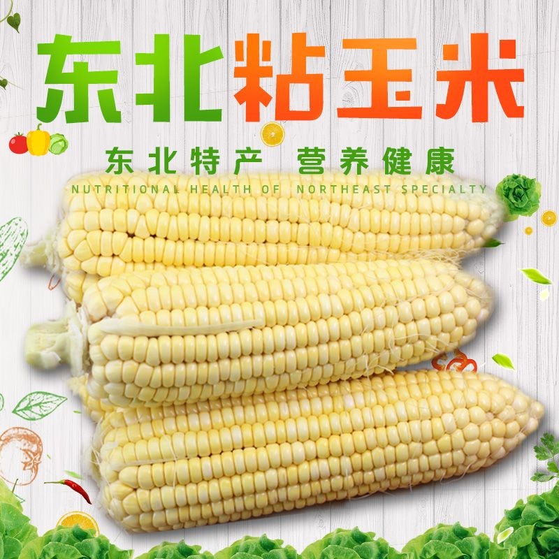 10棒东北新鲜粘玉米棒子甜嫩黏黄白玉米苞米现掰带叶发货包邮