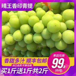 现货云南品种香印青提阳光玫瑰晴王葡萄新鲜水果2斤顺丰包邮