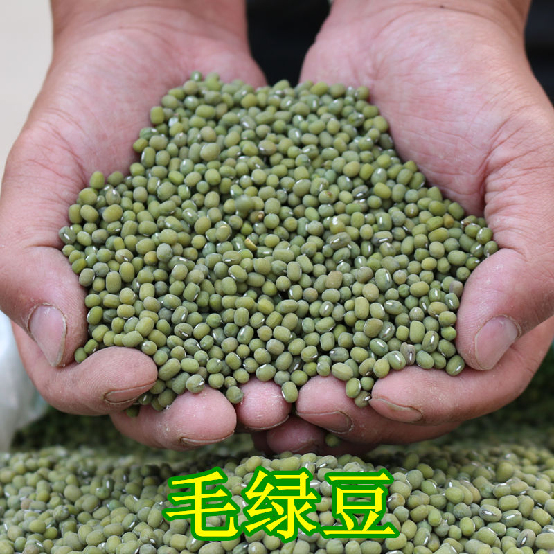 2018年新产农家绿豆毛绿豆小粒毛绿豆500g=1斤