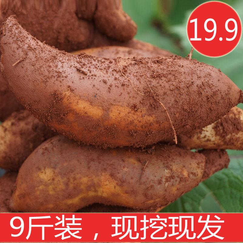 云南天山雪莲果现挖9斤包邮 农家特产红泥沙时令水果10斤新鲜当季