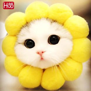太阳花帽子猫咪狗狗甜甜圈兔子头套泰迪幼犬抖音宠物头饰向日葵