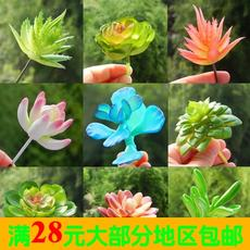 Simulation of succulents artificial fake green plant green interior decoration plastic mini plant potted meat