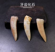 Natural tooth fossil