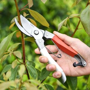 园艺剪刀不锈钢树枝修枝剪摘水果花木剪子园林果树花卉枝嫁接工具