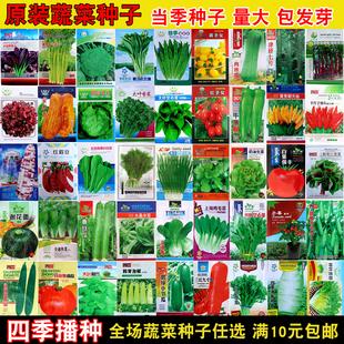 蔬菜种子菜园阳台盆栽辣椒茄子黄瓜生菜西红柿豆角香菜甜瓜菜种籽